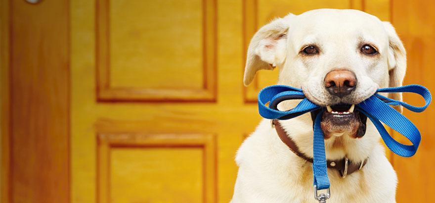 تجربه آموزش حیوان خانگی